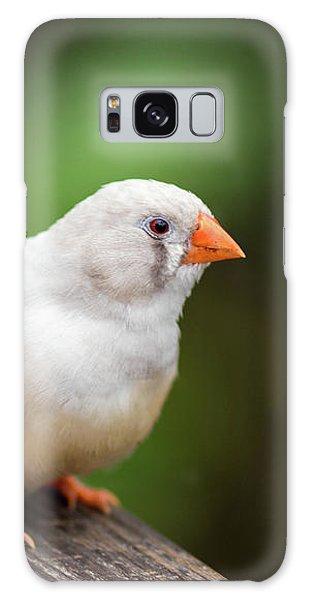 White Bird Standing On Deck Galaxy Case