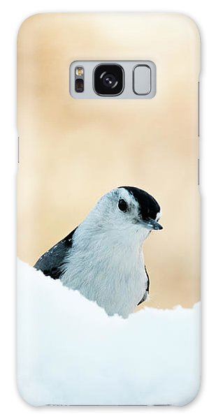 White Breasted Nuthatch In Snow Galaxy Case