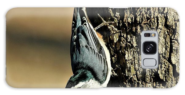 White-breasted Nuthatch On Tree Galaxy Case