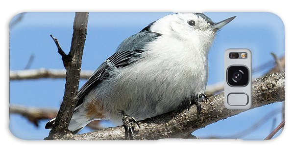 White-breasted Nuthatch Perched Galaxy Case