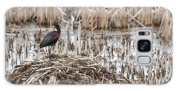 White-faced Ibis 2017-1 Galaxy Case by Thomas Young