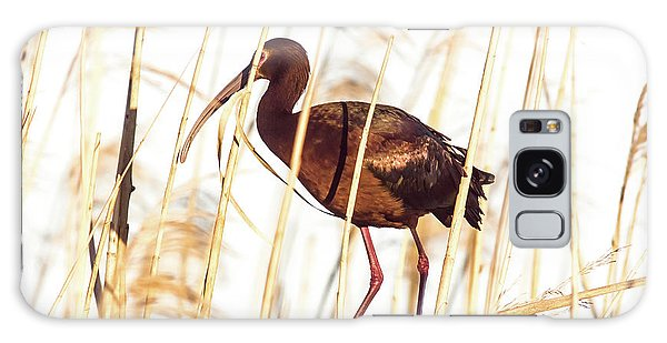 White Faced Ibis In Reeds Galaxy Case by Robert Frederick