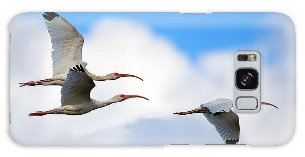 Ibis Galaxy Case - White Ibis Flock by Mike Dawson