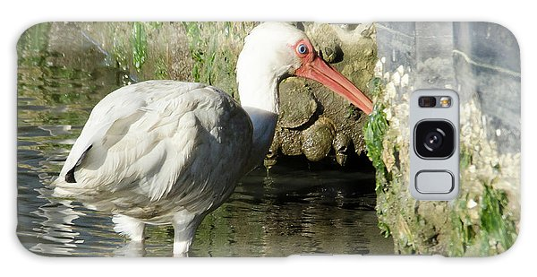 White Ibis Headed Home Galaxy Case by George Randy Bass
