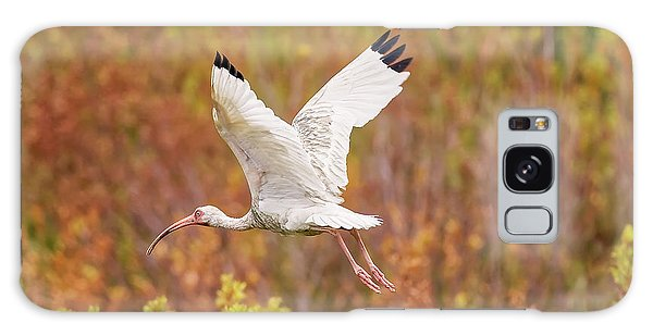 White Ibis In Hilton Head Island Galaxy Case