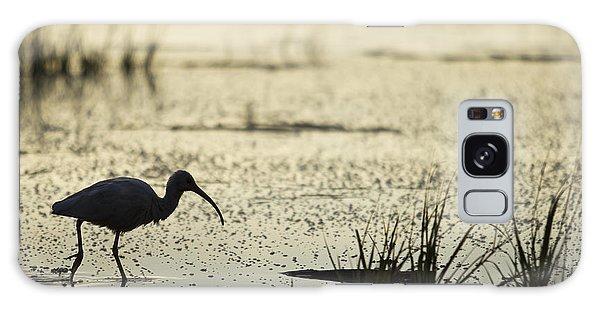 Ibis Galaxy Case - White Ibis Morning Hunt by Dustin K Ryan