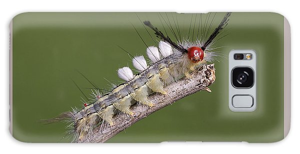 White-marked Tussock Moth Galaxy Case by David Lester