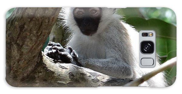 Exploramum Galaxy Case - White Monkey In A Tree 4 by Exploramum Exploramum