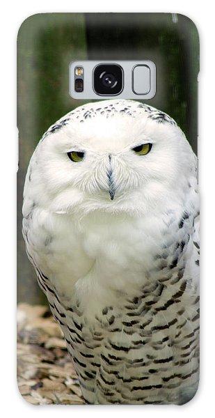 White Owl Galaxy Case