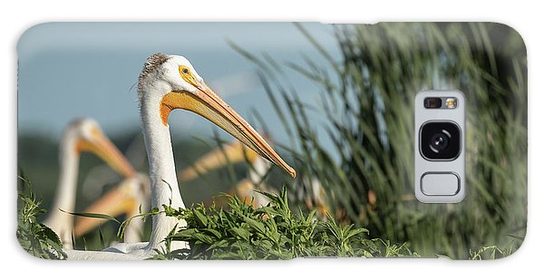 White Pelican 7-2015 Galaxy Case by Thomas Young