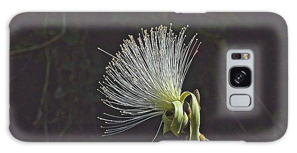 White Shaving Brush Pseudobombax Flower Galaxy Case