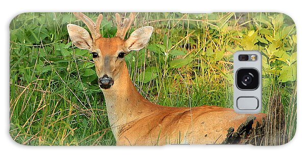 White-tail Buck Resting Galaxy Case