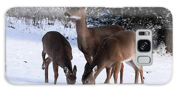 White-tailed Deer - 8855 Galaxy Case