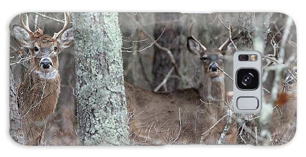 White Tailed Deer Smithtown New York Galaxy Case