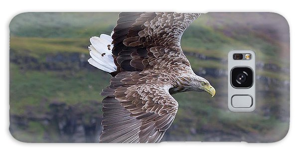 White-tailed Eagle Banks Galaxy Case