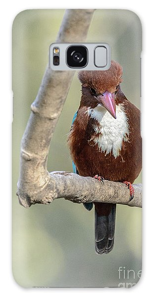 White-throated Kingfisher 01 Galaxy Case