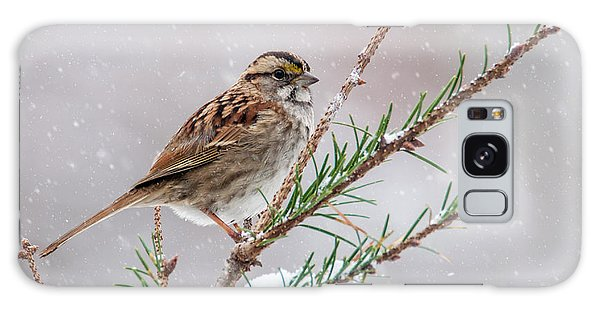 White Throated Sparrow Galaxy Case