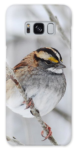 White Throated Sparrow Galaxy Case by Michael Peychich