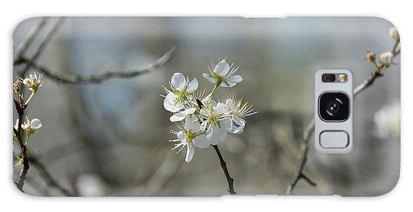 White Tree Bud Galaxy Case