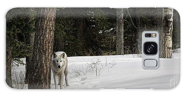 White Wolf Galaxy Case by Brad Allen Fine Art
