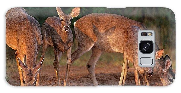Whitetail Deer At Waterhole Texas Galaxy Case