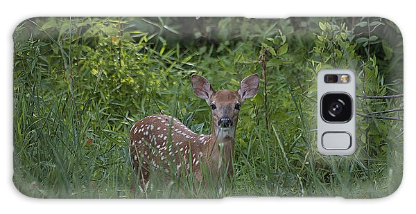Whitetail Fawn 20120711_37a Galaxy Case by Tina Hopkins
