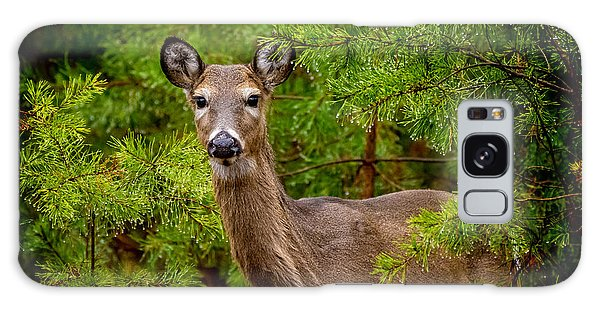 Whitetail In The Pines Galaxy Case