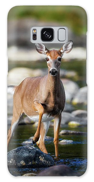 White-tailed Deer Galaxy Case - Who Goes There by Bill Wakeley
