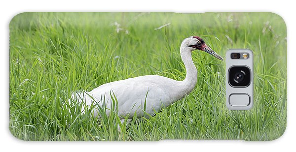 Whooping Crane 2017-2 Galaxy Case by Thomas Young
