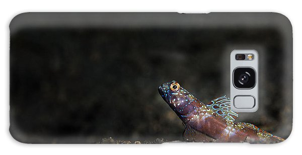 Wide-barred Shrimp Goby Galaxy Case