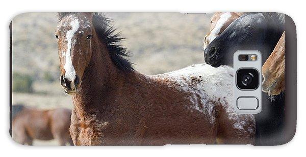 Wild Appaloosa Mustang Horse Galaxy Case