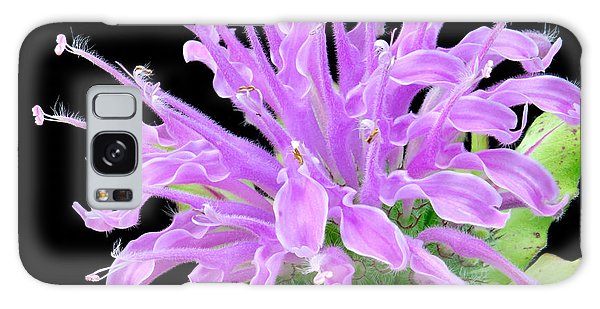 Wild Bergamot Also Known As Bee Balm Galaxy Case by Jim Hughes