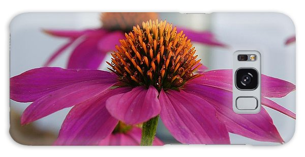 Galaxy Case - Wild Berry Coneflower by Megan Cohen