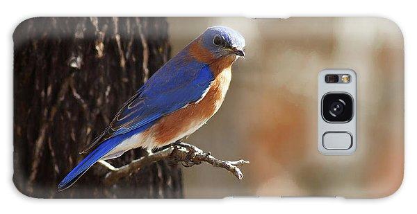 Eastern Bluebird Galaxy Case - Wild Blue by Lana Trussell