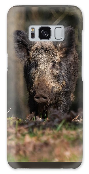 Wild Boar Sow Portrait Galaxy Case