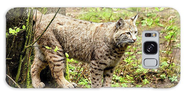 Wild Bobcat Galaxy Case