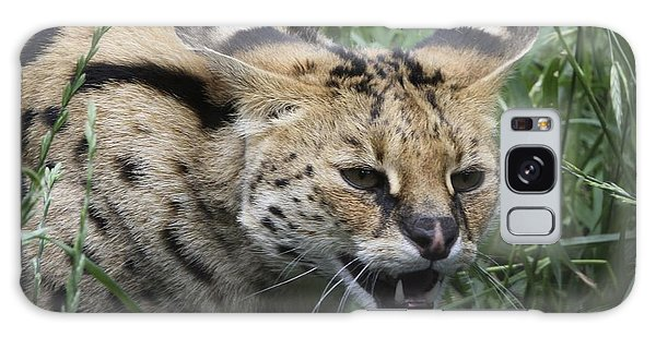 Wild Cat Galaxy Case