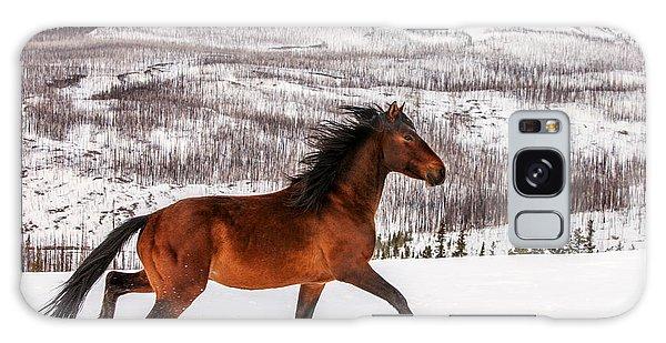 Horse Galaxy Case - Wild Horse by Todd Klassy