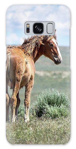 Wild Mustang Colt Of Sand Wash Basin Galaxy Case