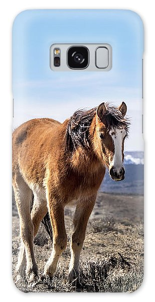 Wild Mustang Filly Of Sand Wash Basin Galaxy Case