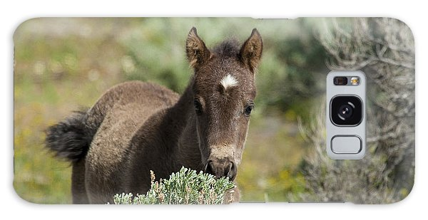 Wild Mustang Foal Galaxy Case
