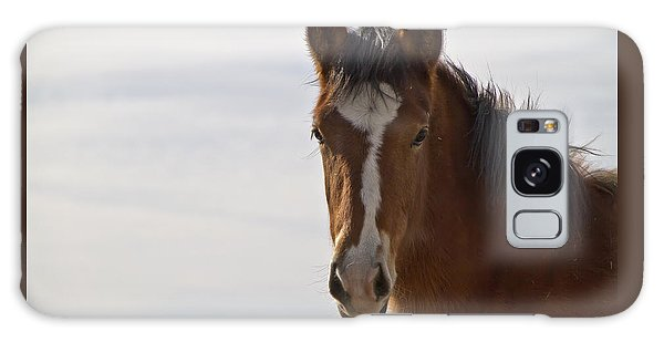 Wild Mustang Yearling Galaxy Case