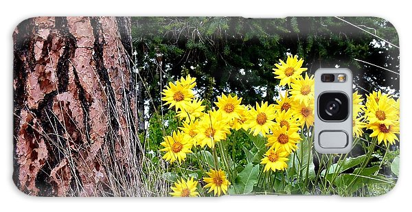 Oyama Galaxy Case - Wild Oyama Sunflowers by Will Borden