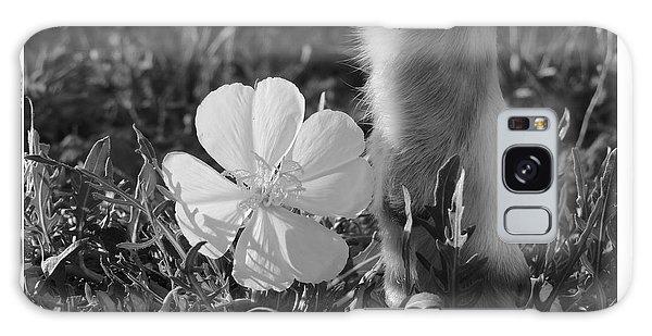 Wild Primrose With Dog's Foot Galaxy Case