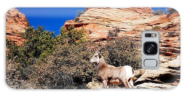 Wild Ram At Zion Galaxy Case