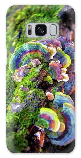 Wild Striped Mushroom Growing On Tree - Paradise Springs - Kettle Moraine State Forest Galaxy Case by Jennifer Rondinelli Reilly - Fine Art Photography