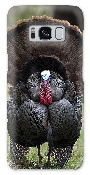 Wild Turkey In All Its Glory Galaxy Case