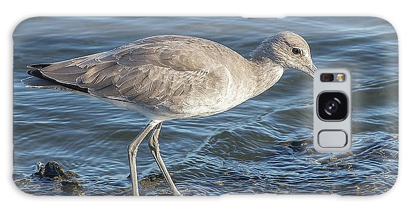 Willet In Winter Plumage Galaxy Case