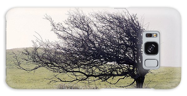 Windswept Tree Galaxy Case