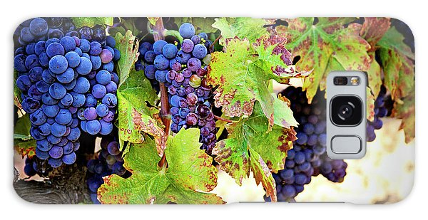Wine Country - Napa Valley California Photography Galaxy Case by Melanie Alexandra Price
